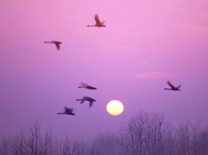 白鸟交响乐