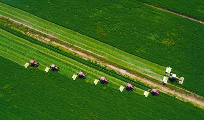蚌埠:十万亩紫花苜蓿草开镰收割